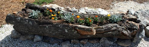 log-planter