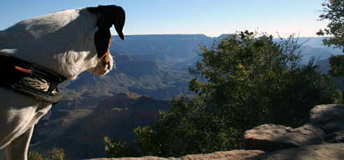 Dottie looking over rim of Grand Canyon